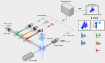 流式细胞仪工作原理